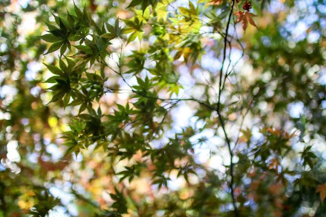 Breenhold Gardens Mount Wilson Flowers