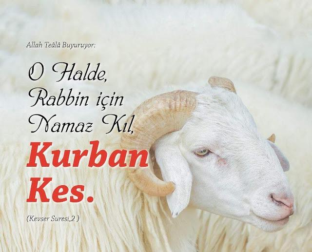Kurban ile ilgili ayetler, Kurban ile ilgili hadisler nelerdir? Kurban Kuran'da geçiyor mu? nasıl geçiyor? Peygamberimiz Hz. Muhammed'in (s.a.v) kurban hakkında söyledikleri.