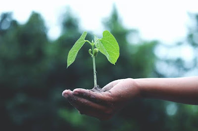 Hindi Poem on Afforestation