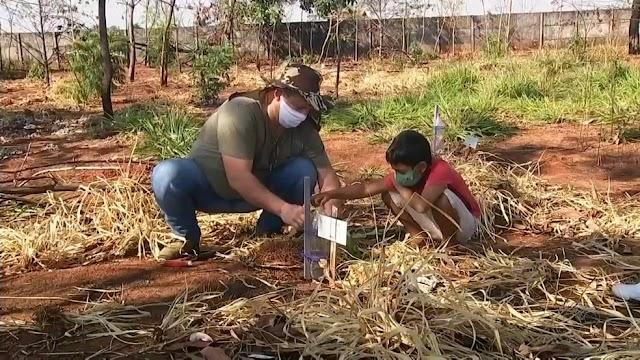 Morador planta mudas de árvores para reflorestar área de preservação consumida pelo fogo em Jales