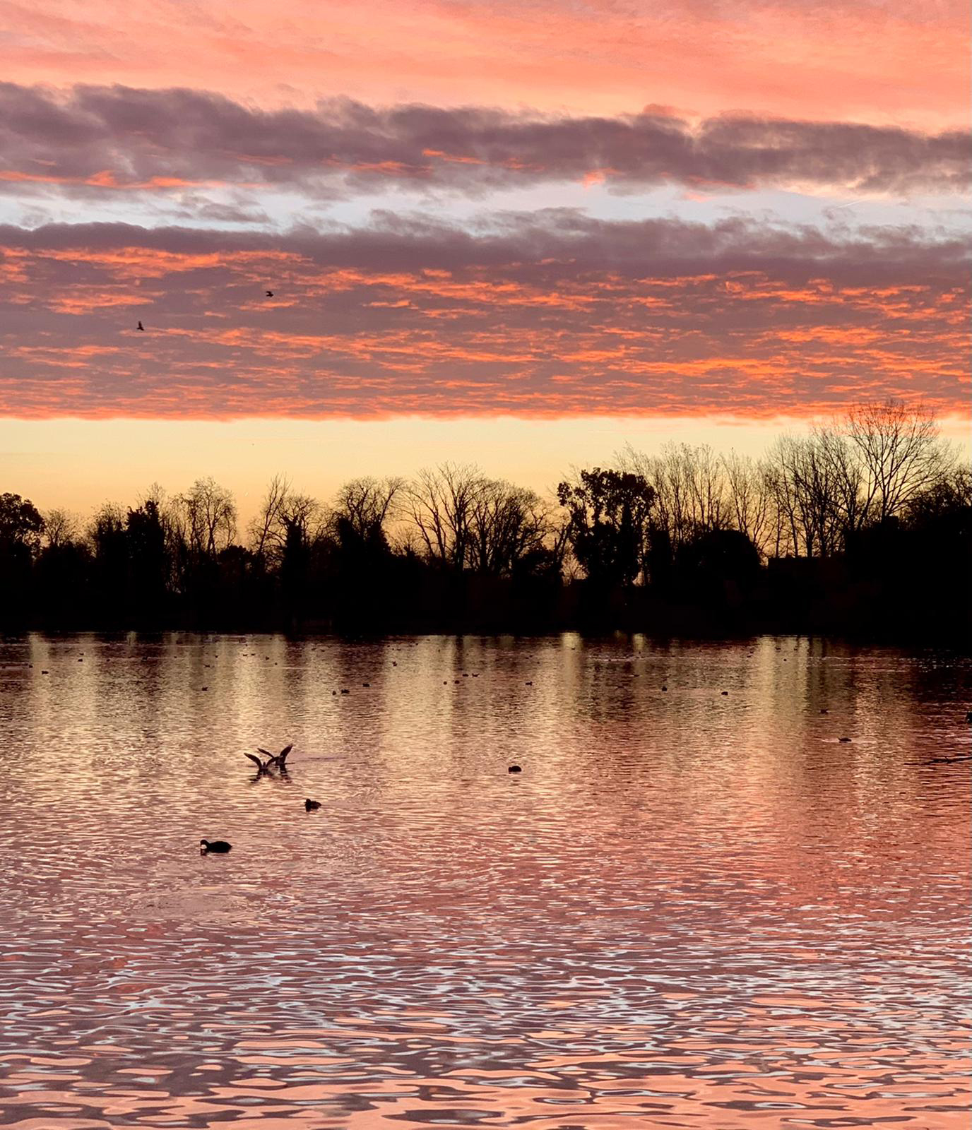 A spectacular sunrise over Connaught Water in Epping Forest, winter 2020