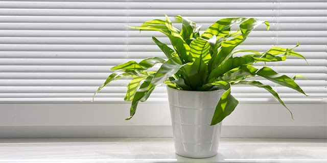8 Ways to Know If Your Indoor Air Quality Is Bad