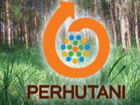 Perum Perhutani - Recruitment For D3, S1 Fresh Graduate Program Perhutani August 2015