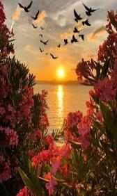 Gambar keren sunset