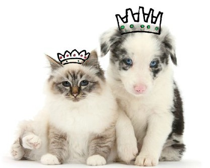 RIch names for dogs and cats