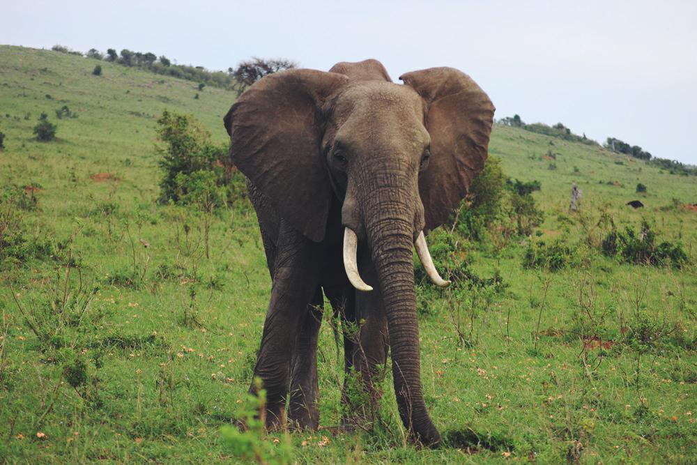 yvonne-karnath-masai-mara-safari-kenya-kenia-afrika-travel-blog-reise
