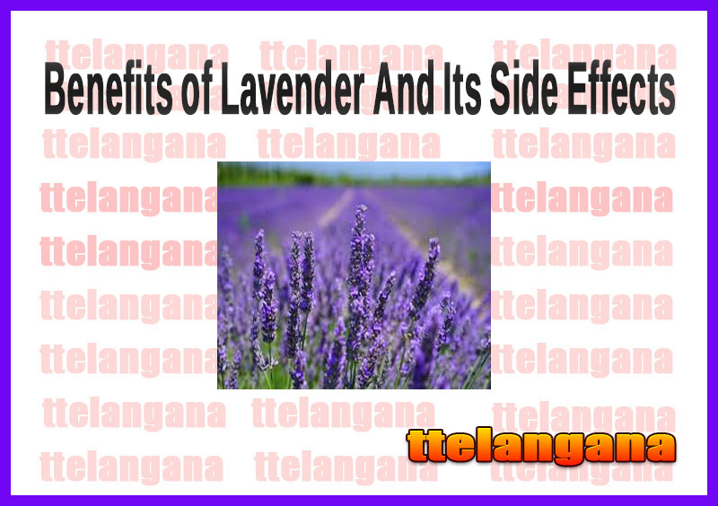 Benefits of Lavender And Its Side Effects