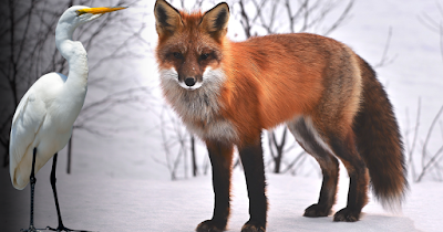 The fox and crane's invitation: A moral story