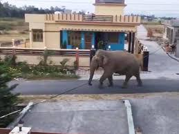 Elephant go outside