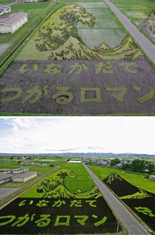 Fotografia de artes feitas por japoneses em uma plantação de arroz