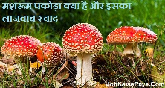 What is Mushroom Pakora and its awesome taste