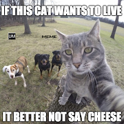 If this cat wants to live