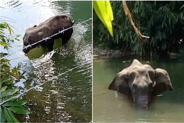 1-arrested-for-alleged-involvement-in-death-of-pregnant-elephant-says-kerala-forest-minister