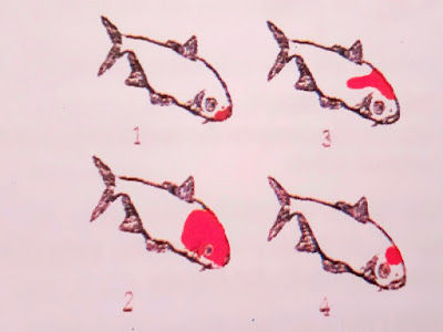 Gambar Jenis Ikan Koi Berdasarkan Pola Warna Kepala Koi