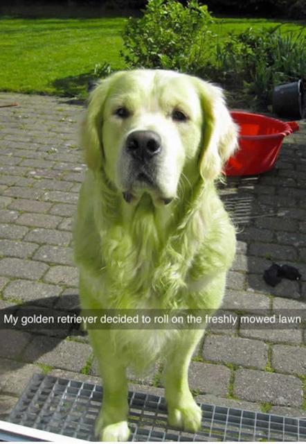 Best Dog Memes Viral Online 10