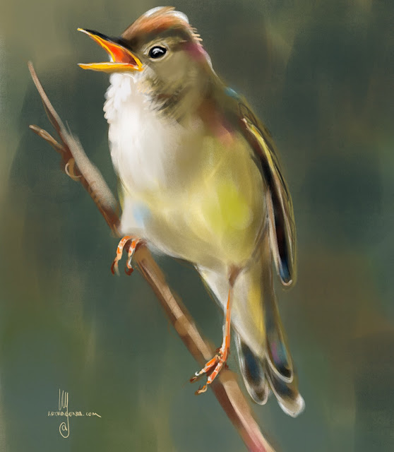 Marsh Warbler bird painting by Artmagenta