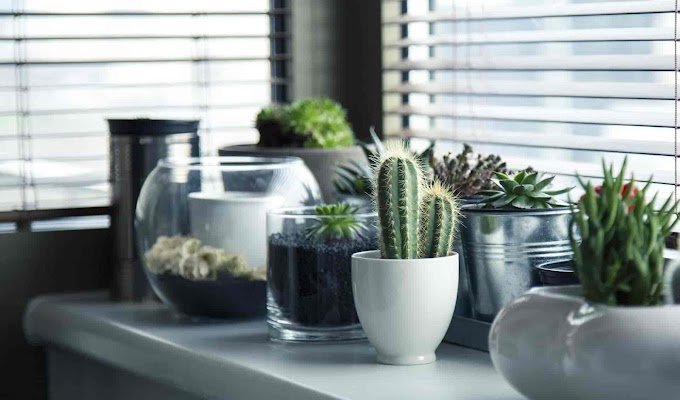 5  tipos de vasos que vão dar um up na sua casa