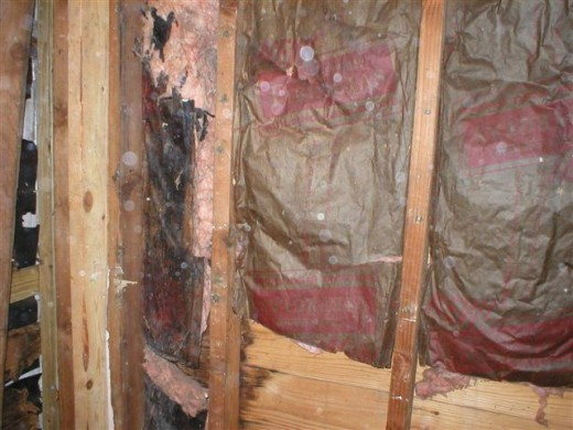 Black Mould Removal Tips And Info Mold Removal Diy