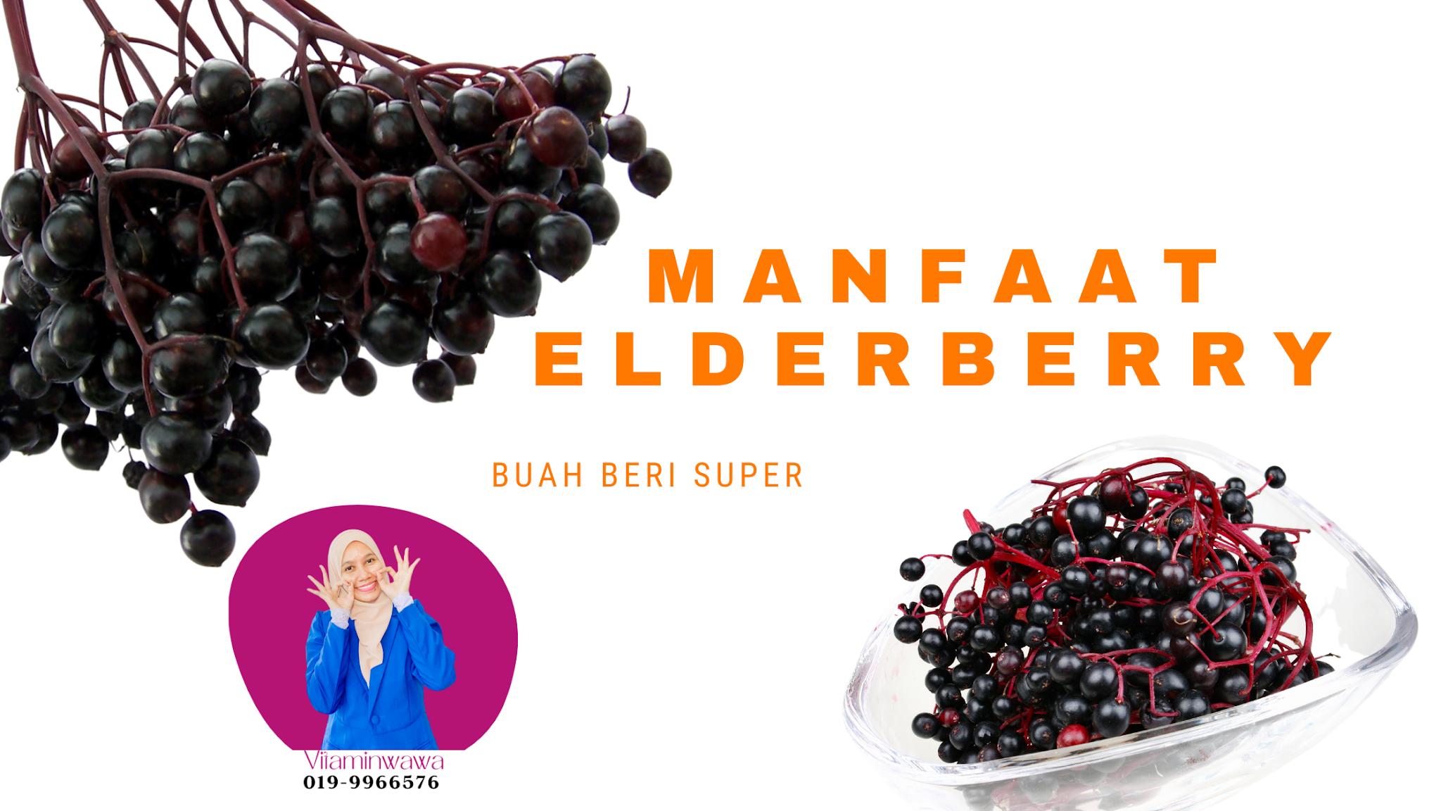 Life Shake Elderberry Shaklee , Manfaat elderberry