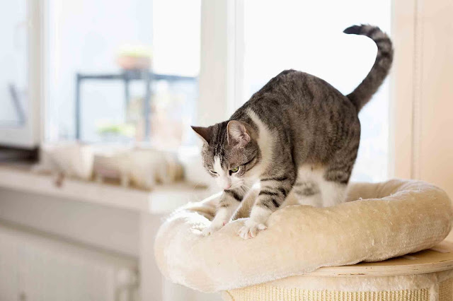 Why Do Cats Knead? | Cats Knead