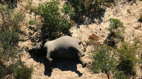 In this country, more than 350 elephants were found dead