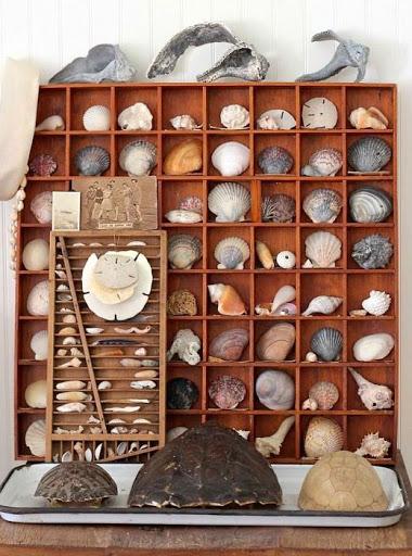 Antique Vintage Printer Tray Sea Shell Decor Idea