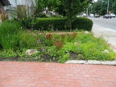 Toronto Paul Jung Gardening Services Avenue Road Front Garden Cleanup Before