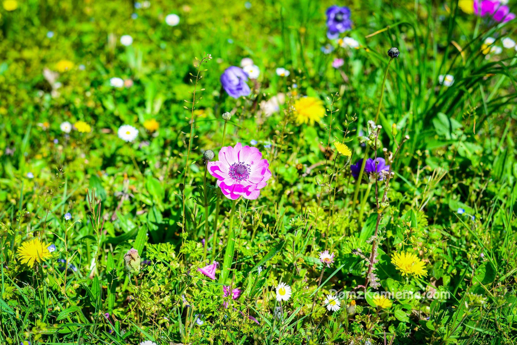 Wiosna w Toskanii, Marradi, Dom z Kamienia blog