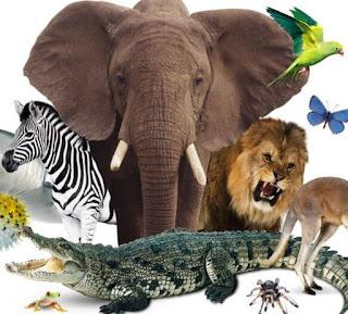 10 حيوانات ذات عمر طويل بشكل لا يصدق