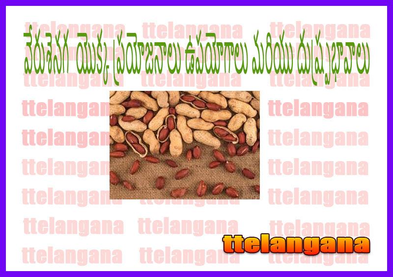 వేరుశెనగ (మూంగ్¬ఫలి) యొక్క ప్రయోజనాలు ఉపయోగాలు మరియు దుష్ప్రభావాలు
