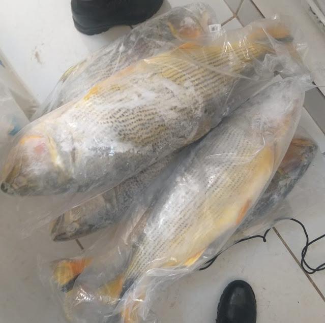 Peixaria recebe mais de R$ 3 mil em multas por irregularidades com pescados