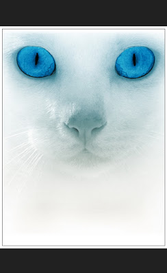 cat'seyes, eyes, pet, domesticcat, head, fur, catface, close, up, cool, wallppaper, animals, silhouette, kitten, pets,feline, funny, cute, adorable, animals, funny, sweety, pretty