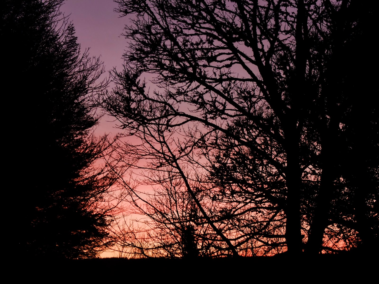 Purple to pink toned sky through bare tree branches.