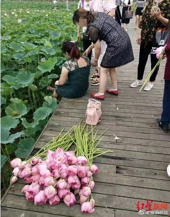 Videos of groups of 'aunties' breaking into the park to pluck out its lotus flowers and bring them home have been circulating across China's web, drawing strong criticism from netizens.