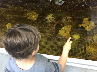 boy looking at coral in a tank