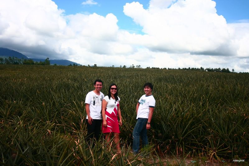 Enldless fields at the Dole pineapple plantation in South Cotabato, Mindanao