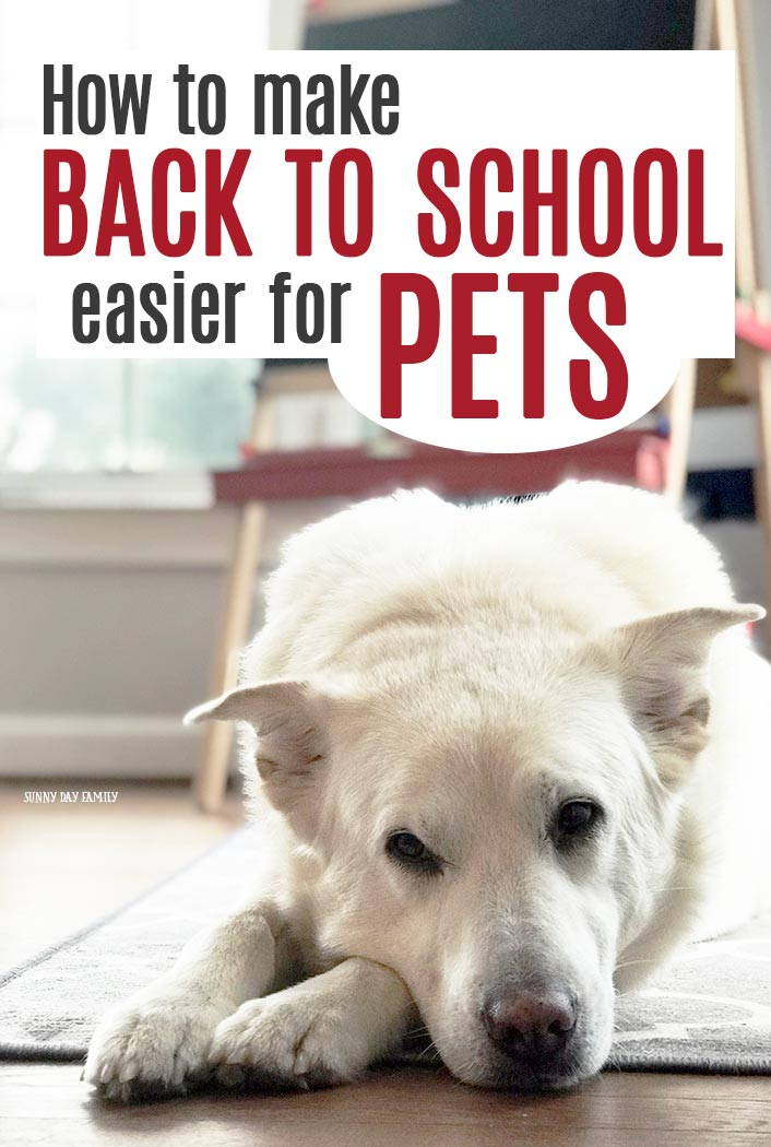 Back to school is hard for pets too! Find out how to help your dog transition to the new school year with these easy tips. #dogmom #backtoschool #dogs #parenting