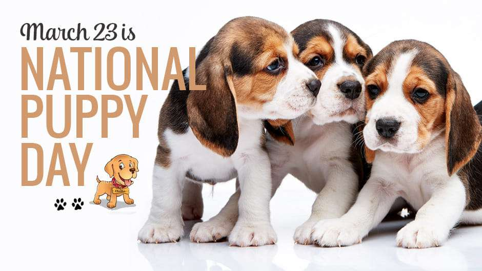 National Puppy Day Wishes for Whatsapp