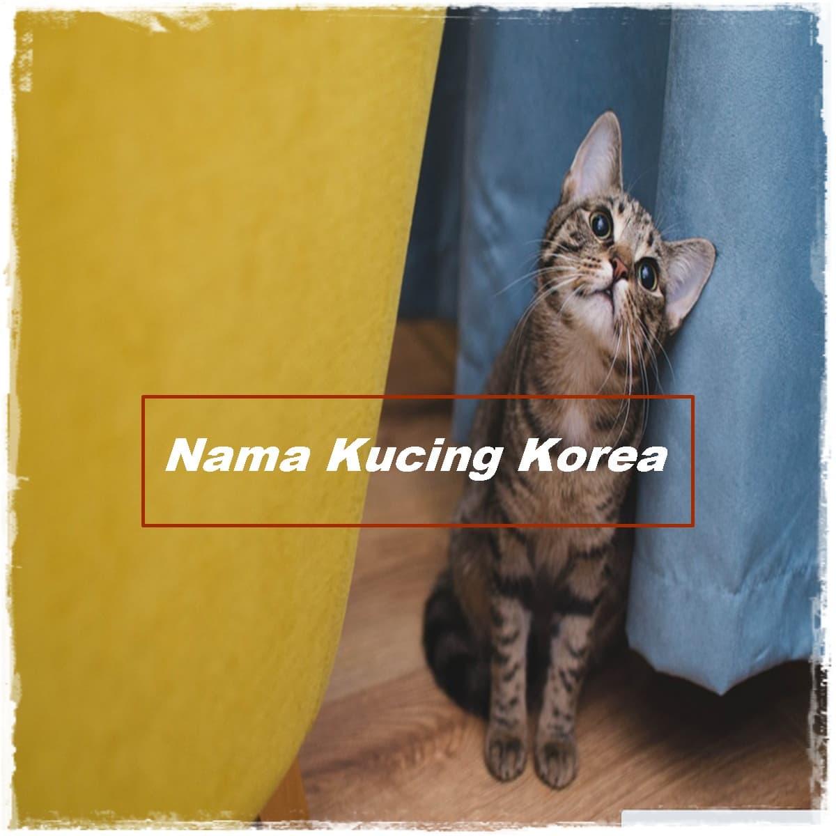 Nama kucing korea yang bagus
