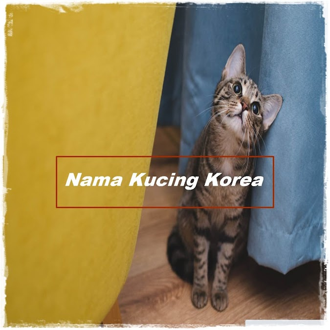 Nama Kucing Korea yang Bagus, Keren dan Lucu