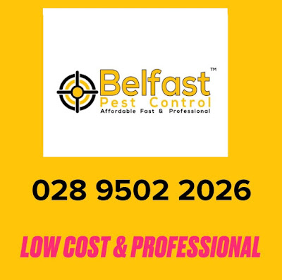 Pest Control In Belfast UK