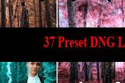 37 Preset DNG Lightroom Terbaik Dan Terkeren