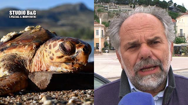 Αργολίδα: Δραματική έκκληση για την προστασία των θαλάσσιων χελωνών (βίντεο)
