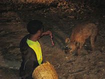 Wary hyenas in Harar approach a handler for their nightly ration of meat (Ethiopia)