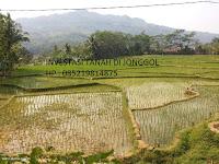Investasi Tanah Di Jonggol