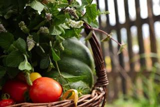Impartirá CDMX taller para la producción de alimentos ecológicos
