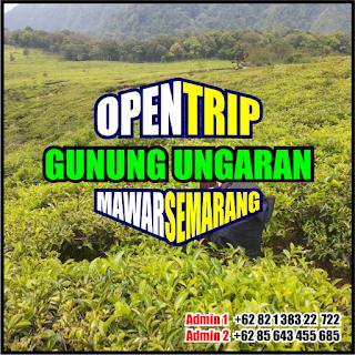 Open Trip Gunung Ungaran Via Mawar Semarang 2H1M 2021