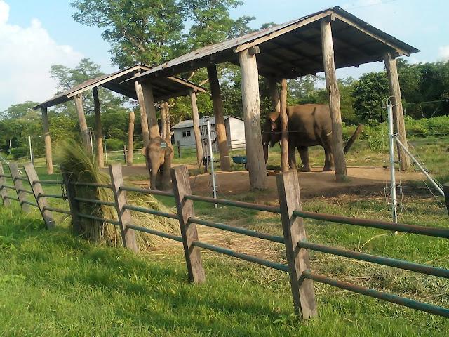Elephant riding in Chitwan