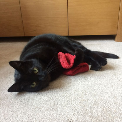 Nicola Pennicott-Hall's cat Vera