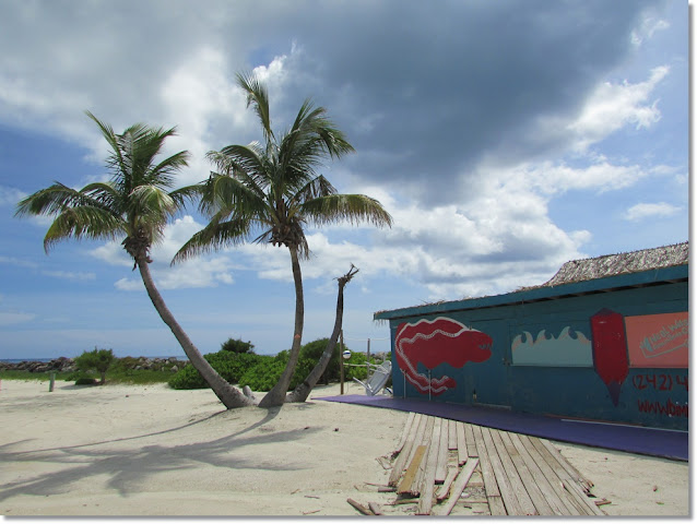 curvy palm trees on a beach in Bimini with broken wooden path leading to a turquoise building.